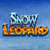 Play Snow Leopard